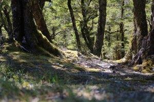 Mount Aspiring National Park in New Zealand.